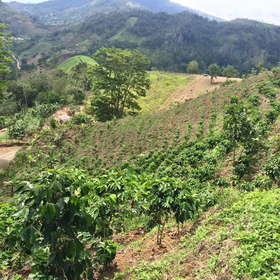 Geschiedenis van koffie in Costa Rica | Zwartekoffie.nl