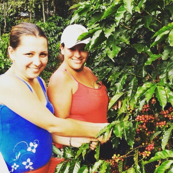 Direct Trade koffie uit Costa Rica | Zwartekoffie.nl